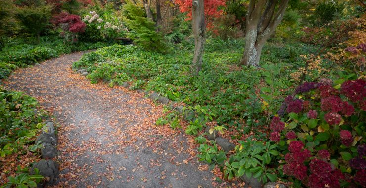 Field Trip 'Autumn Colors' – Botanical Garden Christchurch